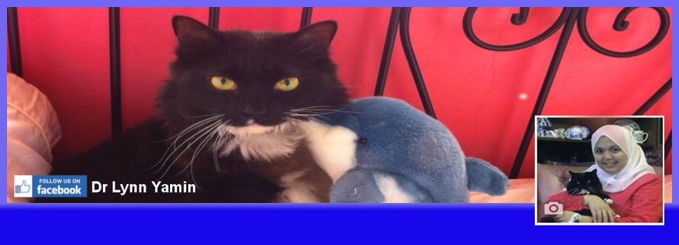 Dapatkan Tips Penjagaan & Info Kesihatan Kucing Anda