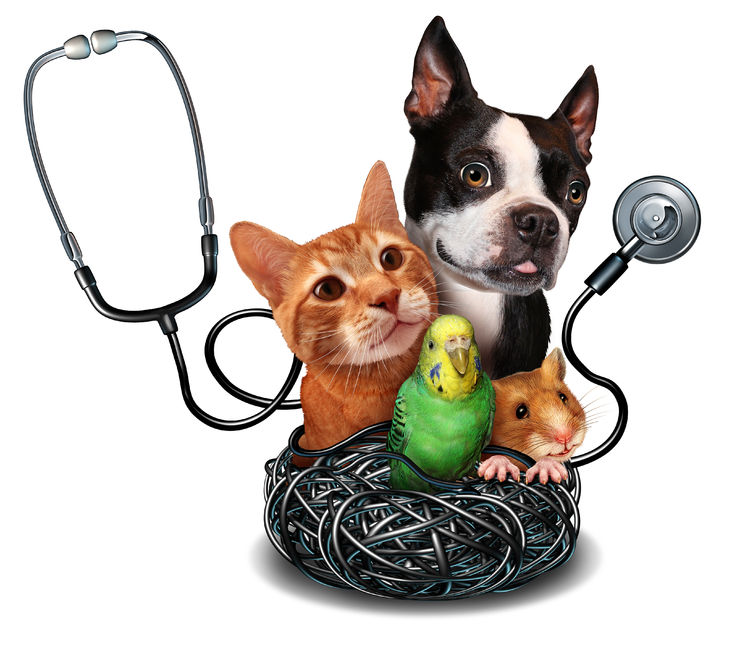 45261468 - veterinary care and pet medicine concept as a group of domesticated animals as a cat dog hamster and bird as a symbol for veterinarian medical healthcare and health insurance for pets.